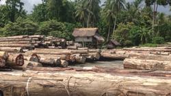 Massiver Holzeinschlag in Papua-Neuguinea