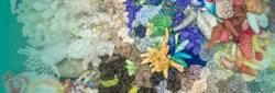 Upcylcing Korallengarten