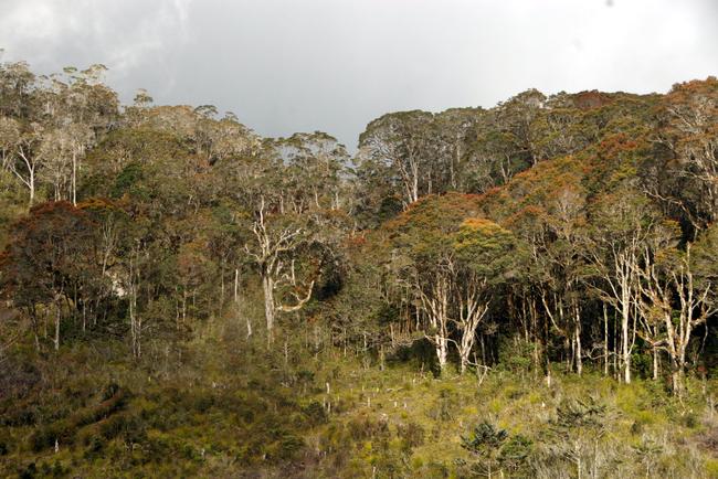 Wald in Westpapua